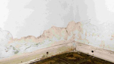 זיהוי נזקי מים בנכס- טיפים ומידע שכדאי לדעת