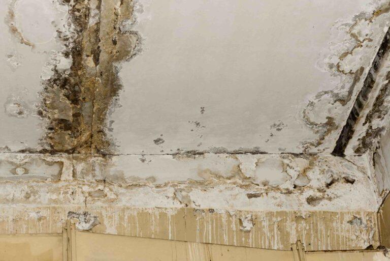 איתור נזילות בקירות
